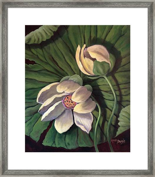Waterlily Like A Clock Framed Print