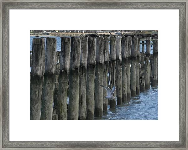 Waterlines Framed Print