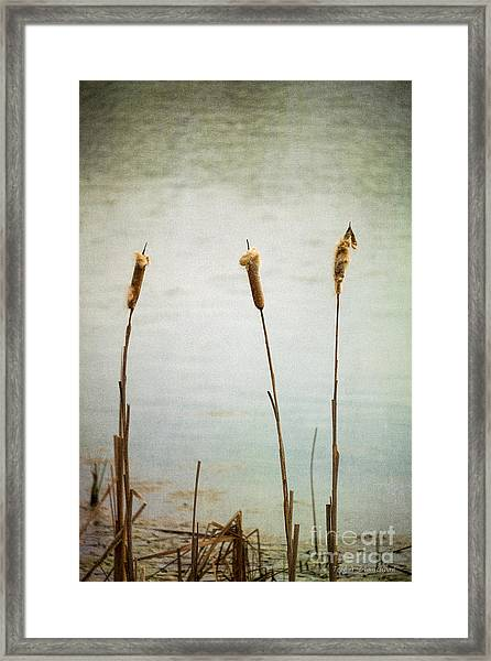 Water's Edge No. 2 Framed Print