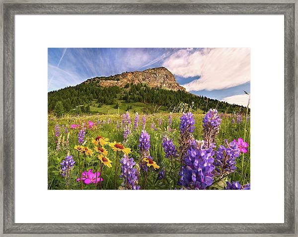 Waterton Wildflowers Framed Print
