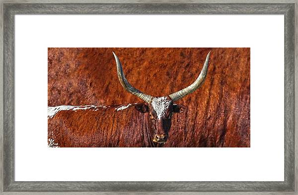 Watusi Blues In Rustic Red Framed Print