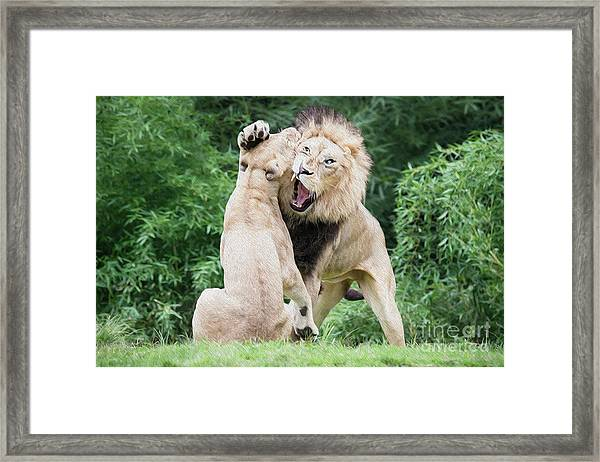 We Are Only Playing Oil Framed Print