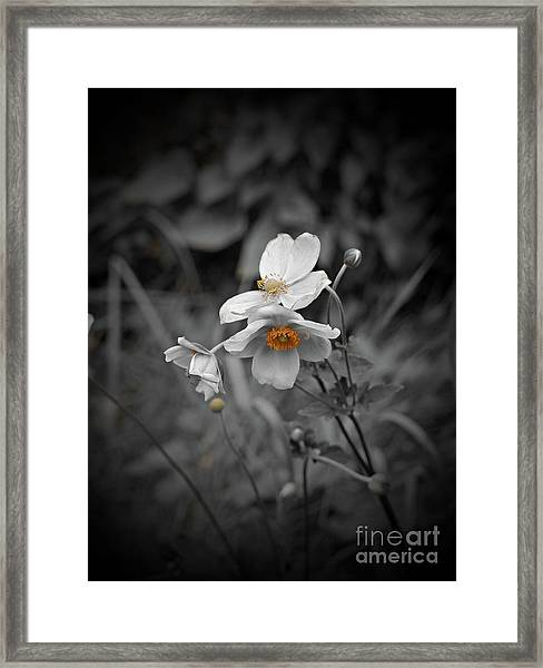 We Fade To Grey 4 Framed Print