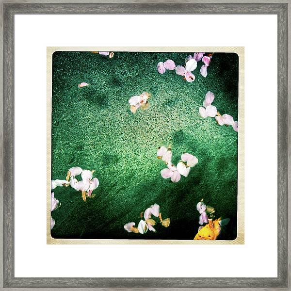 We Float 4 Framed Print