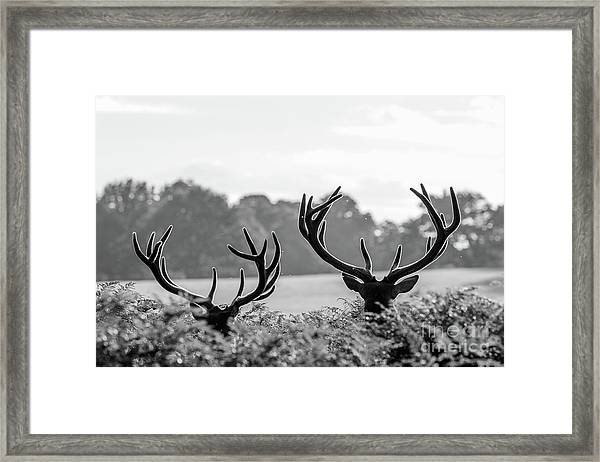 Weaponry Framed Print