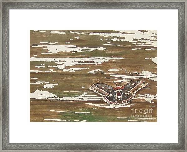 Weathered Framed Print by Carla Dabney