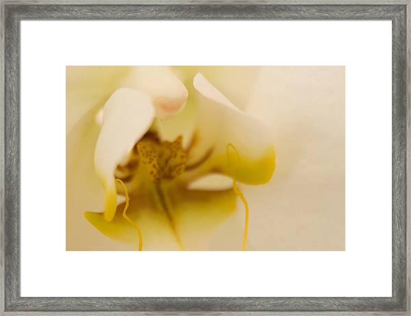 Wedding Orchid Framed Print