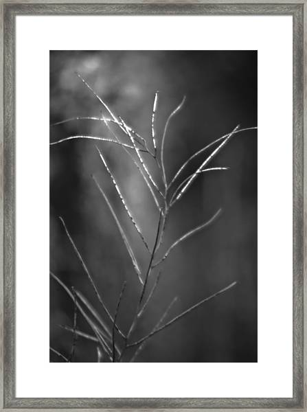 Framed Print featuring the photograph Weeds 1 by Catherine Sobredo