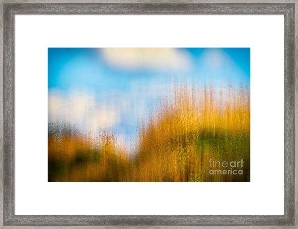 Weeds Under A Soft Blue Sky Framed Print