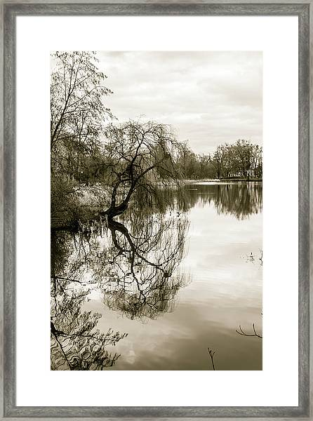 Weeping Willow Tree In The Winter Framed Print