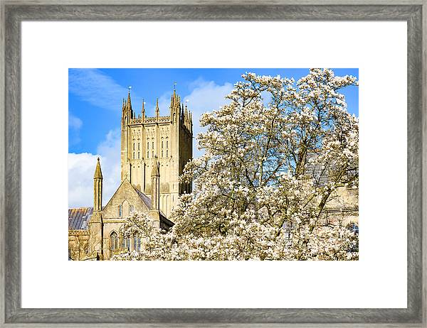 Wells Cathedral And Spring Blossom Framed Print