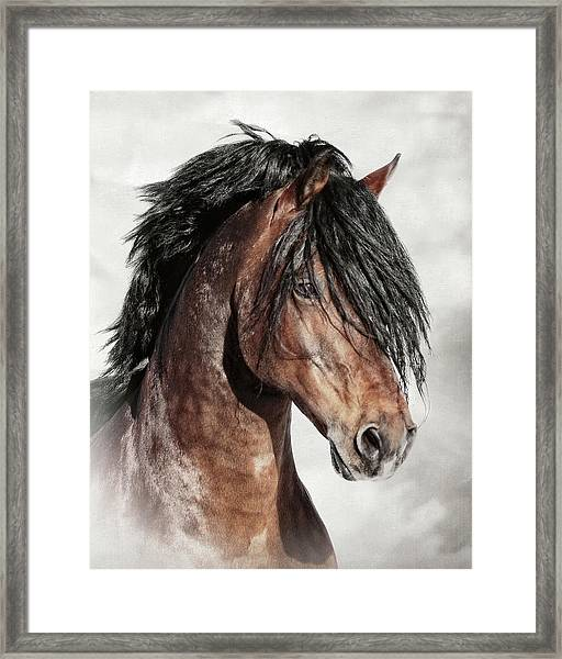 Welsh Cob Portrait Framed Print