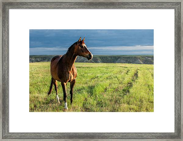 Western Stallion Framed Print