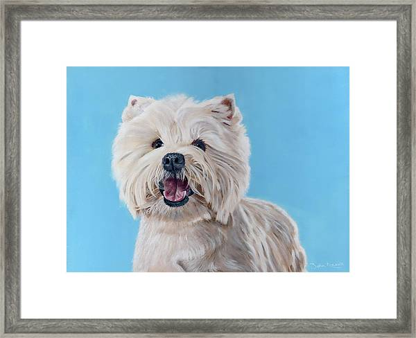 Westie Framed Print