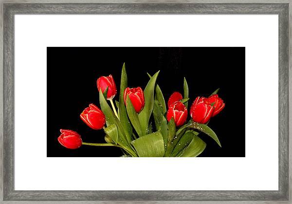 Wet Tulips Framed Print