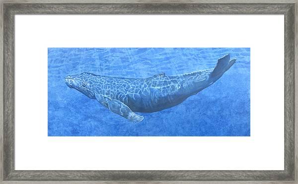 Whale In Surface Light Framed Print