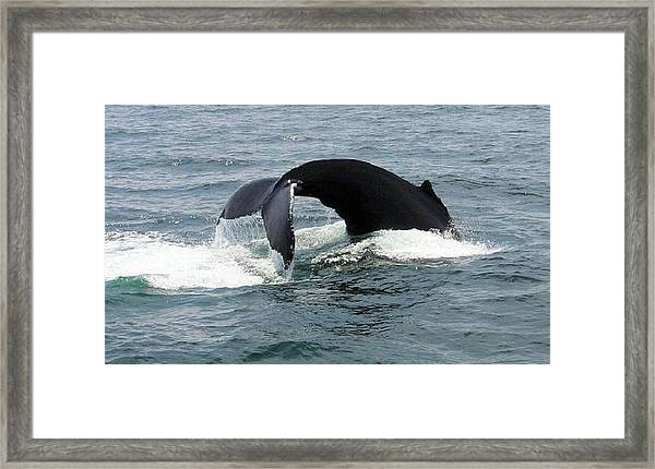 Whale Of A Tail Framed Print
