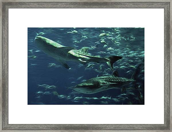 Whale Shark Couple Framed Print