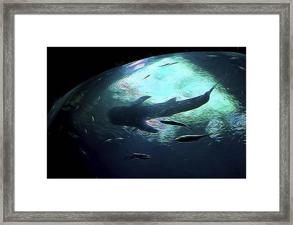 Whale Shark Of The Earth Framed Print