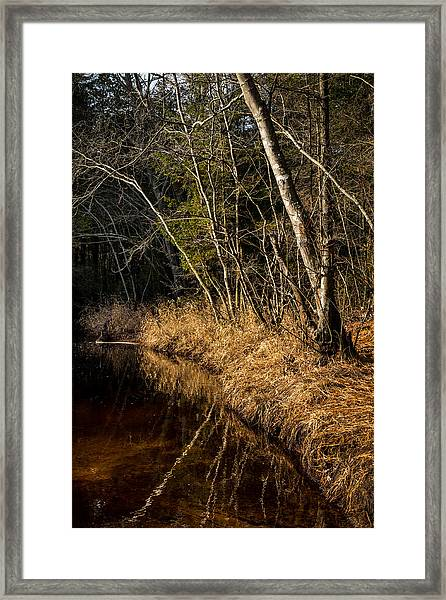 Wharton Forest Fall Framed Print