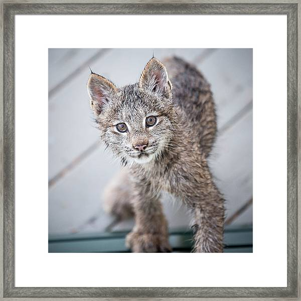 What Are You Framed Print