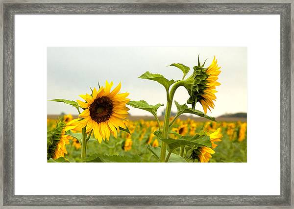 What Did I Say Framed Print by Robert  McCord