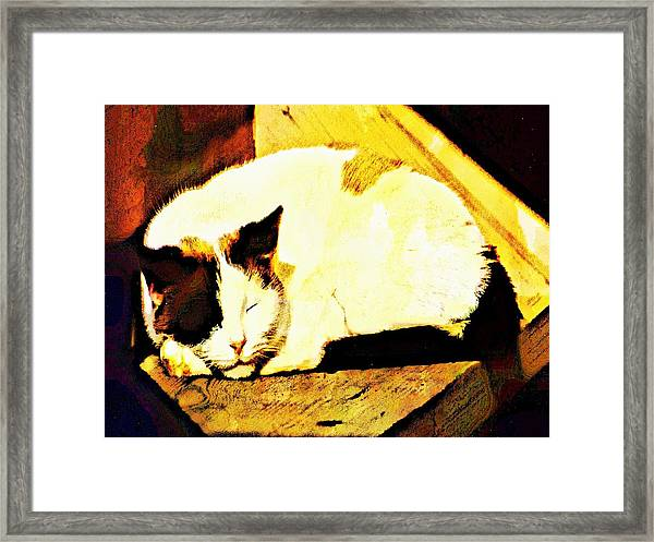 What Do Cats Dream Of Framed Print