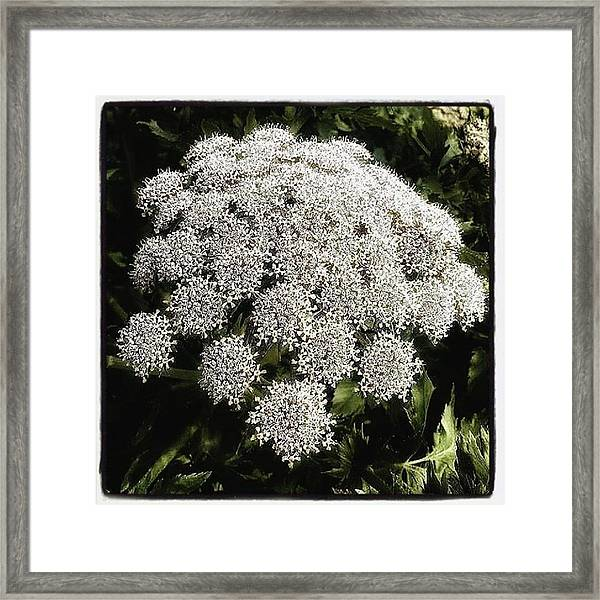 Framed Print featuring the photograph What Flower Is This? I Think It's by Mr Photojimsf