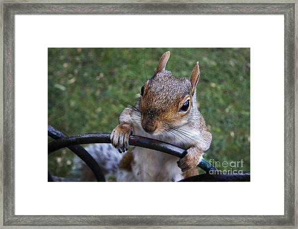whats Up Framed Print
