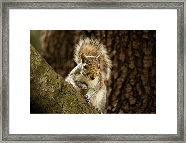 What's Up? Framed Print