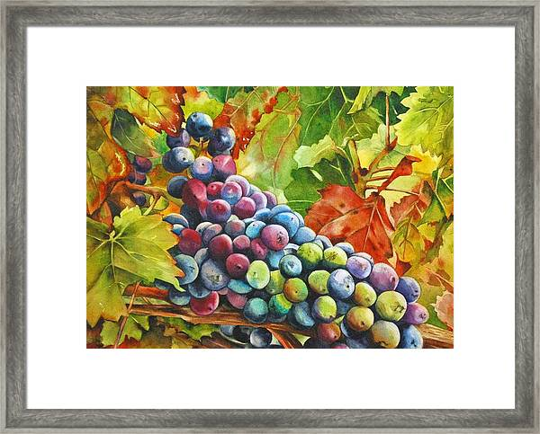 What's Your Grape Framed Print