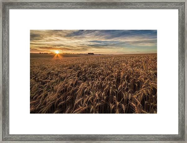 Wheat At Sunset Framed Print