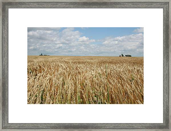 Framed Print featuring the photograph Wheat Farms by Dylan Punke