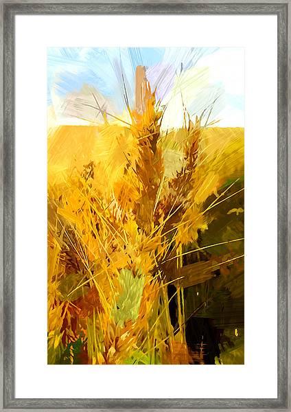 Wheat Field Framed Print