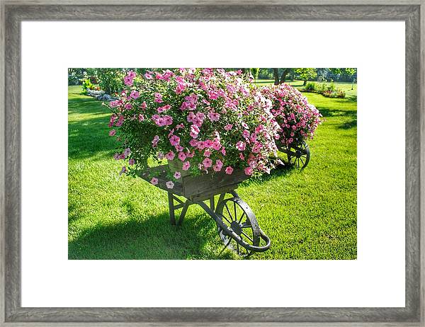 2004 - Wheel Barrow Full Of Flowers Framed Print