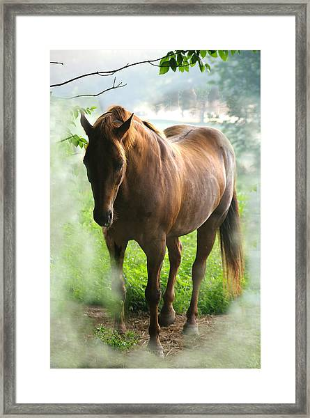 When You Dream Of Horses Framed Print