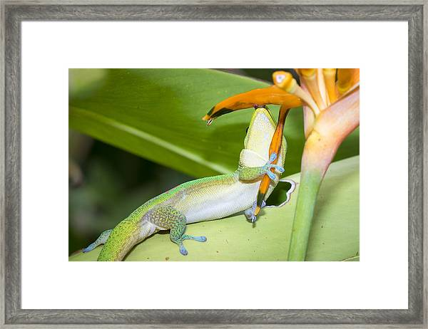 When You Love Something...this Much Framed Print