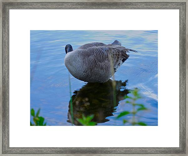 Where Are You Shadow Framed Print