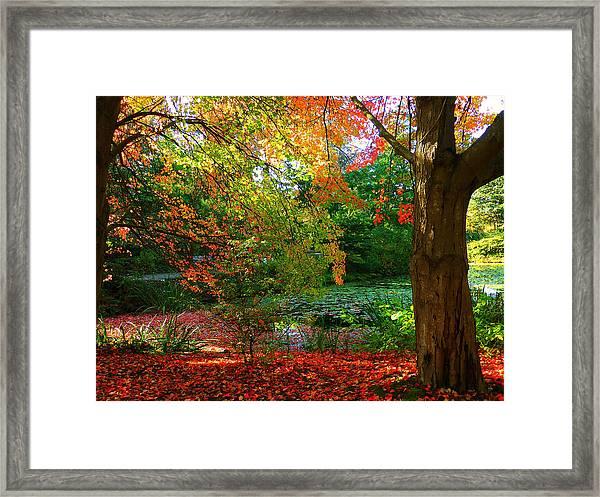 Where Autumn Lingers  Framed Print