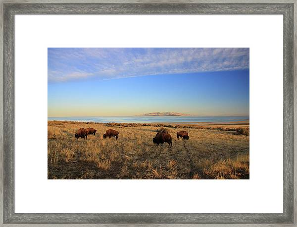 Where The Buffalo Roam Framed Print by Gene Praag