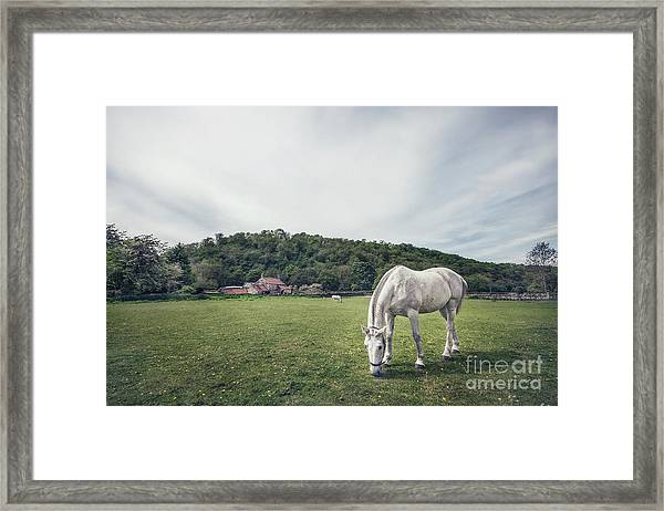 Where The Green Grass Grows Framed Print