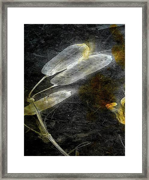 Where There Had Been Light II Framed Print