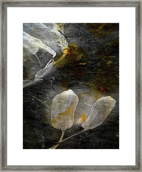 Where There Had Been Light IIi Framed Print
