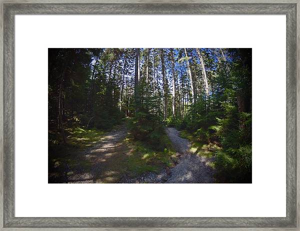 Which Path? Framed Print