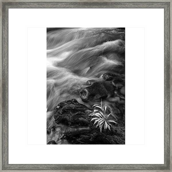 While Standing Next To A Stream I Framed Print
