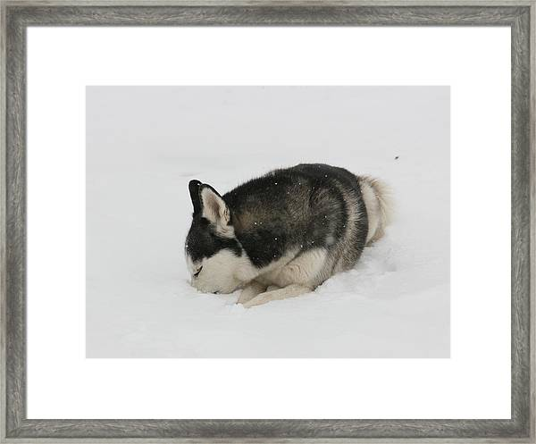 While You Were Sleeping Framed Print