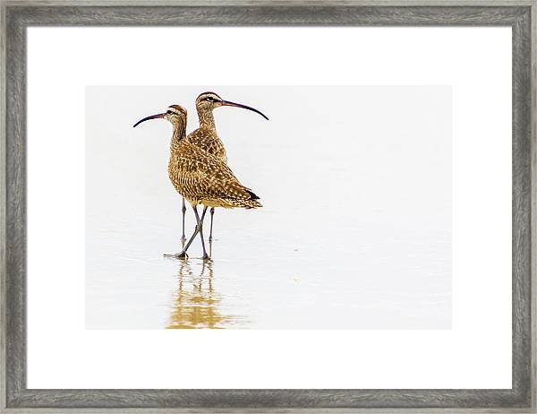 Whimbrel Sandpiper On The Beach Framed Print