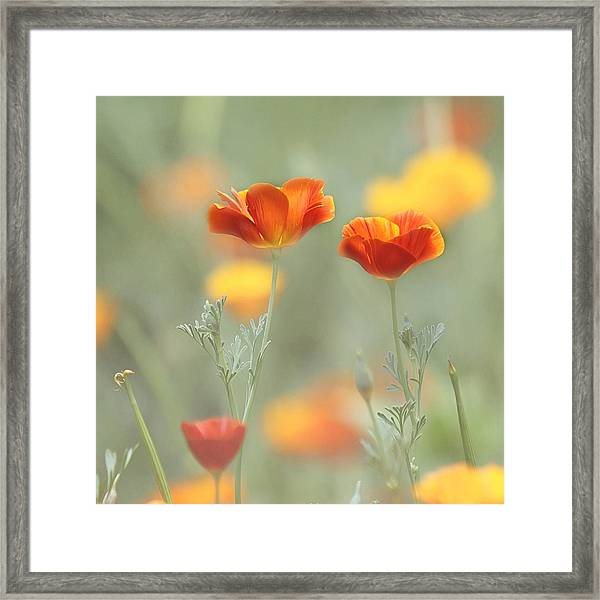 Whimsical Summer Framed Print