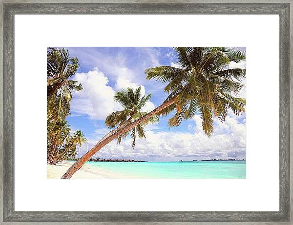 Whispering Palms. Maldives Framed Print