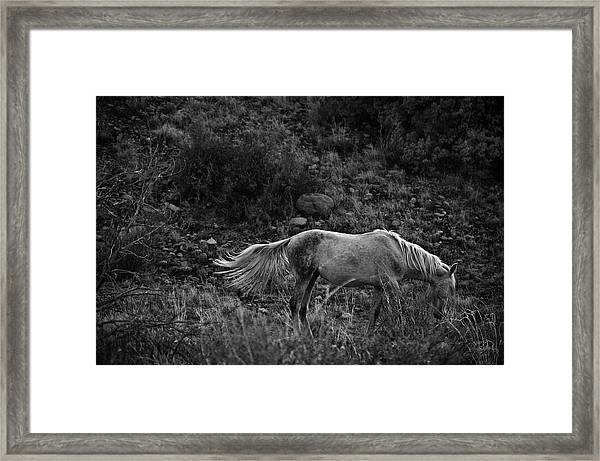 Framed Print featuring the photograph White 47 by Catherine Sobredo